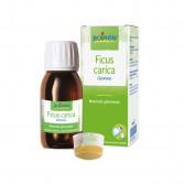 Ficus Carica Gemme | Macerato Glicerinato 1 DH 60 ml | BOIRON