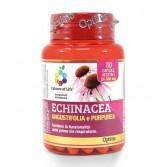 Echinacea Angustifolia e Purpurea 60 cps | Integratore Sistema Immunitario | OPTIMA NATURALS