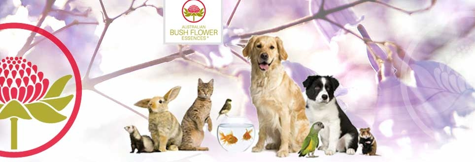 Bush Flower fiori australiani per animali domestici