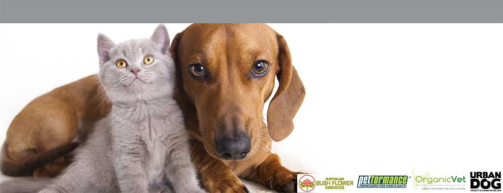 Catalogo Veterinaria Bravi Farmacie Shop Online